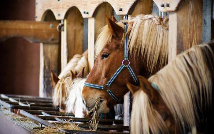 recensioni di Izmailovo club equestre