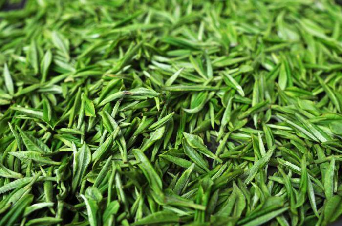quale tè è più utile di verde o nero