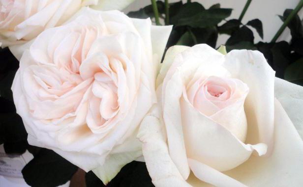 libro dei sogni rose bianche