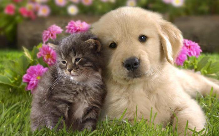 su cani e gatti