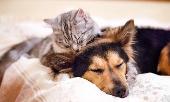 aggiunta di cani e gatti