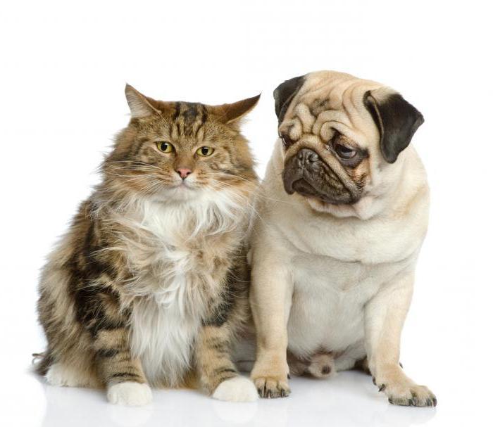 a proposito di cani e gatti 2 classe