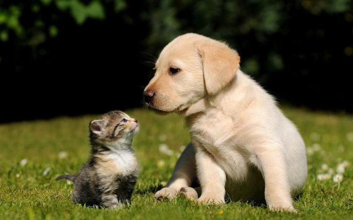 mondo di cani e gatti