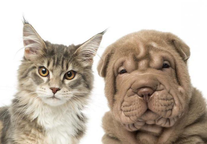su cani e gatti circostanti