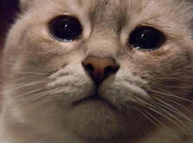 котката плаче