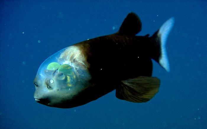 ribe koje žive na dnu oceana