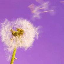 sintomi di tosse allergica