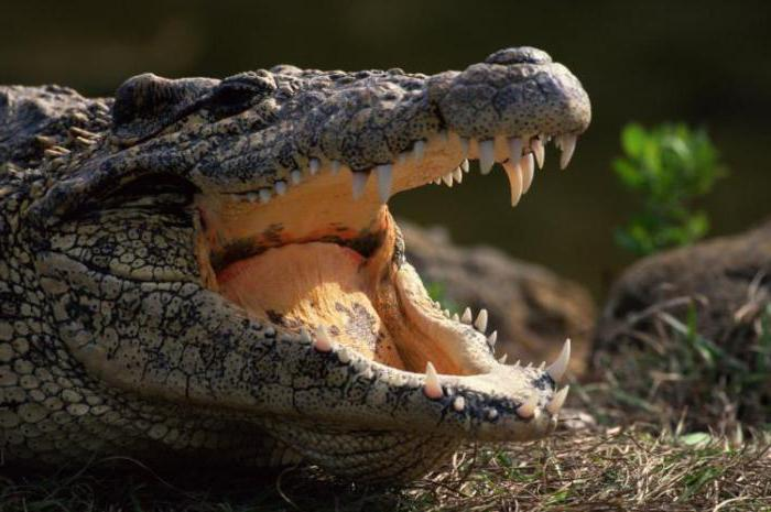 Зашто је крокодилски плач