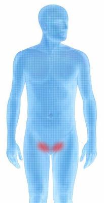 chirurgia dell'ernia inguinale maschile