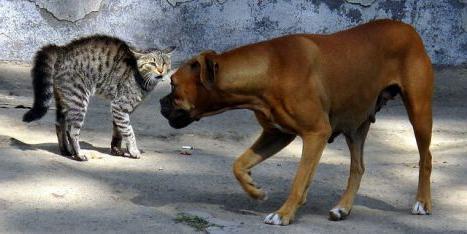 proč psi nemají rád kočky