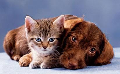 proč psi nemají rádi kočky