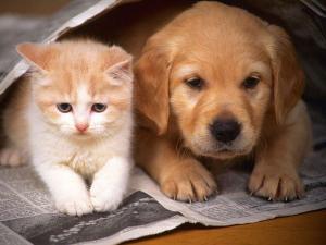 proč psi nemají rádi kočky a kočky myši