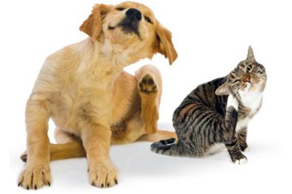 proč psi nemají rádi legendu koček