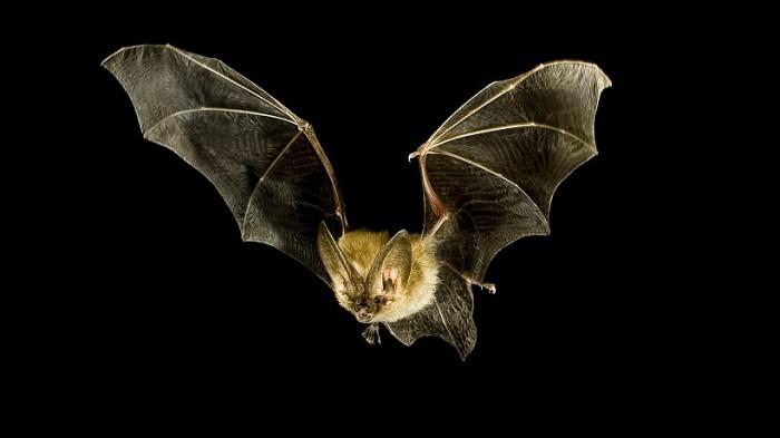 Ciò che sogna un pipistrello