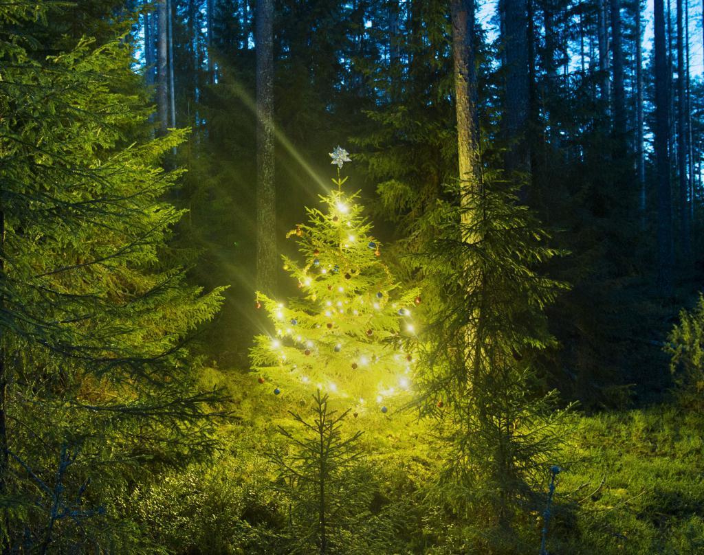 drevo v gozdu