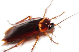 dlaczego marzy o karaluchu