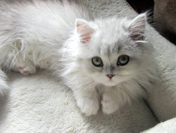 зашто сан о мачићу