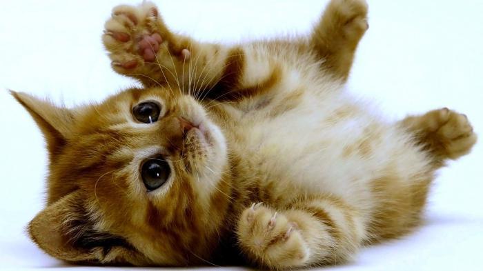 зашто сањаш малу мачку