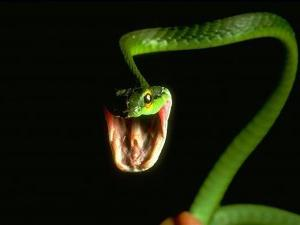 какво означава змия в сън