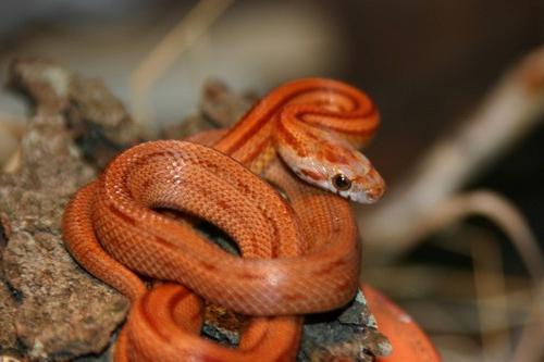 ако сънят е змия