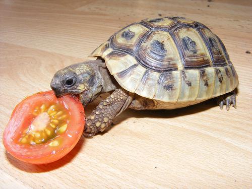 sogno da sogno perché la tartaruga