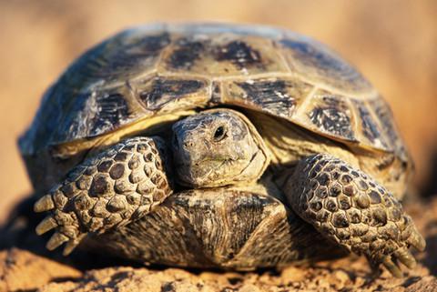perché sogno di una tartaruga