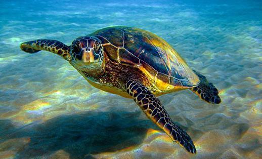 che sogni di tartaruga marina