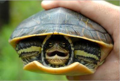 perché sognare una tartaruga viva?
