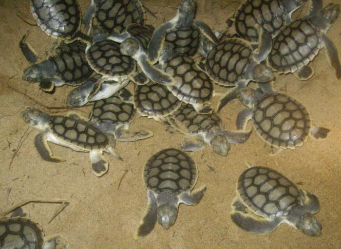 perché sogno sogno tartaruga