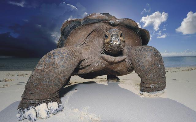perché sognare una grande tartaruga