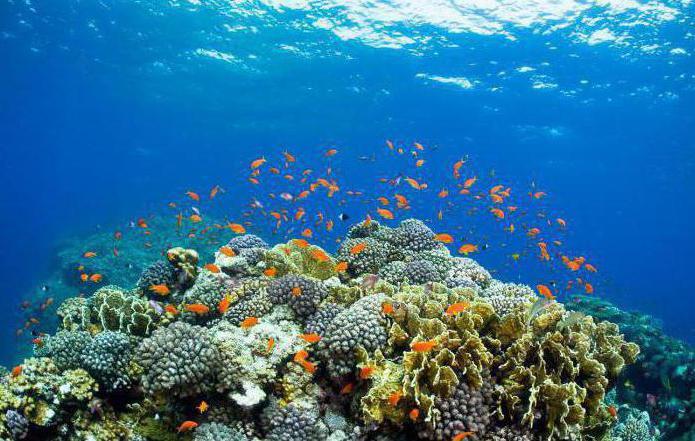 zašto je crveno more slano