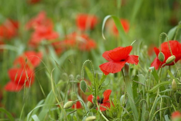 modesti fiori selvatici