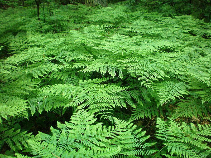 Dzikie rośliny zielne