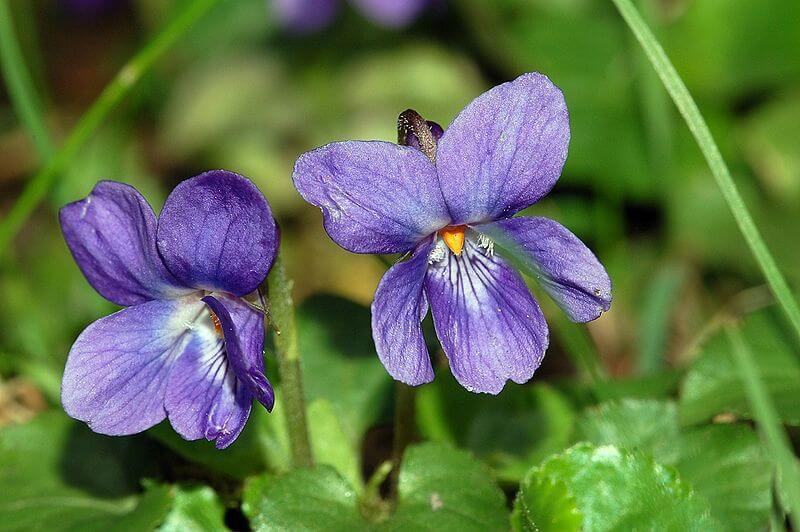 Dzikie kwiaty roślin
