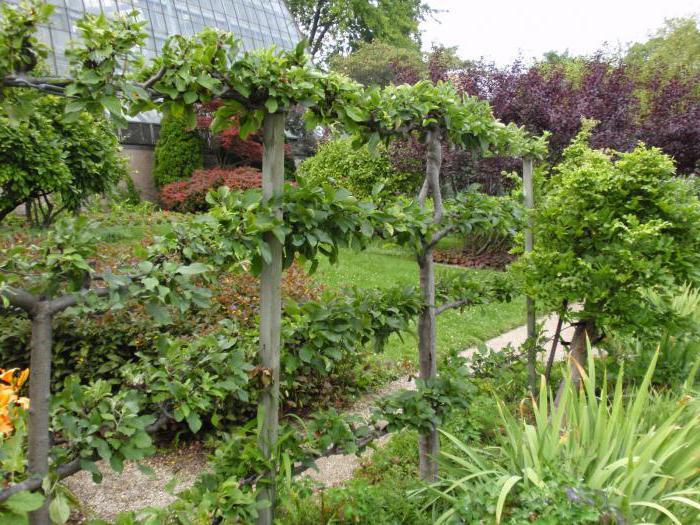 zimski vrtovi u vrtiću