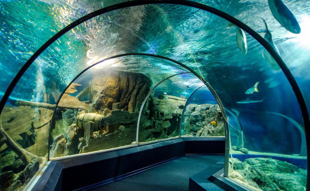 Akwarium w Soczi