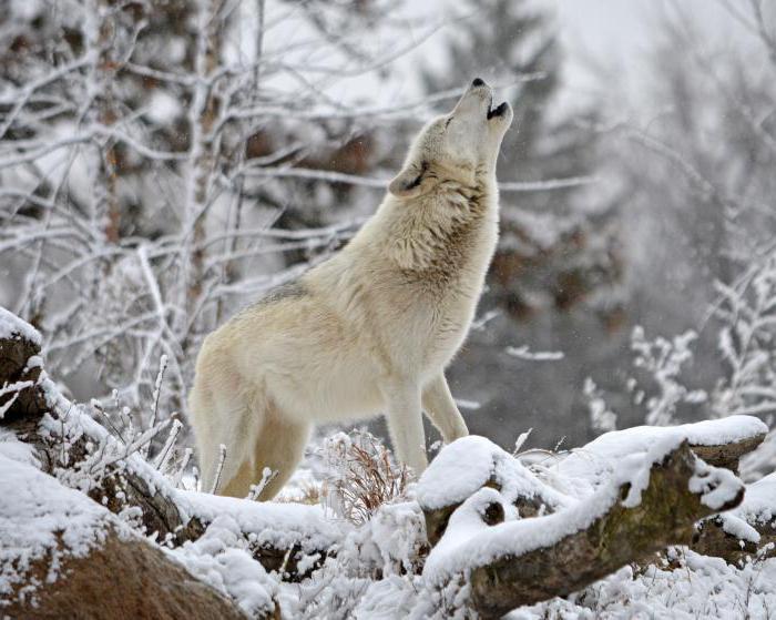 Descrizione della natura invernale russa