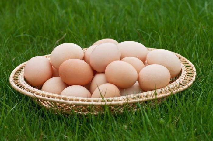 Виандот узгаја пилиће сребро