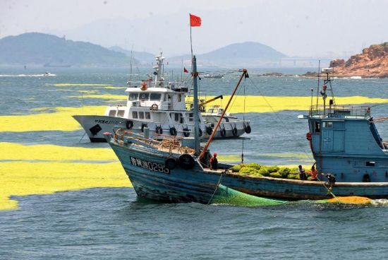 industria della pesca